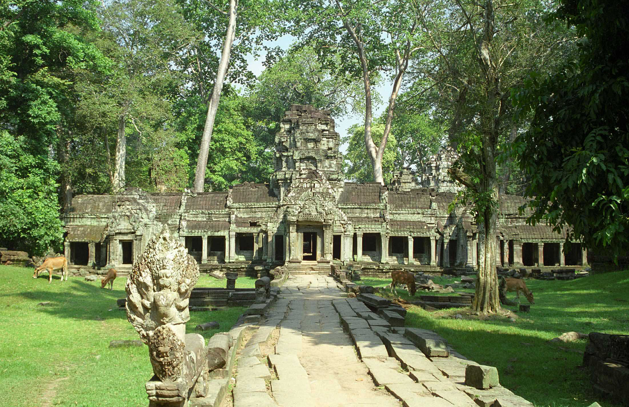Displaying 16> Images For - Ta Prohm Entrance...